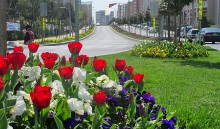Başakşehir çiçek açtı